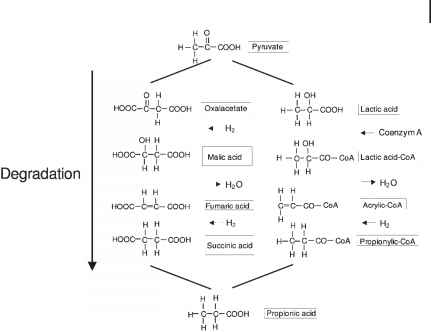 Isovaleric Degradation
