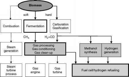 Biomass Fuel Cells Florida